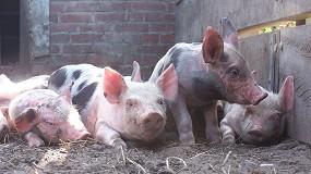 Foto de Un enfoque de biología de sistemas para arrojar luz sobre la calidad del esperma en los cerdos