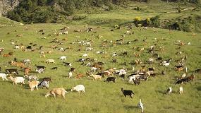 Foto de Los manejos inapropiados de pastos pueden provocar resistencias a los antihelmínticos en caprino