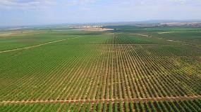 Foto de Estudo: olival moderno de regadio pode ser desenvolvido de forma sustentável e ecologicamente positiva