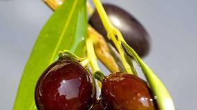 Foto de Olive Oil Booster: extracción de aceite de oliva mediante alto vacío
