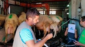 Foto de La condición corporal es un factor fundamental en la inseminación de las razas ovinas