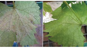 Foto de AgrichemBio apuesta por activar las defensas naturales de la planta para conseguir un viñedo sano y de calidad