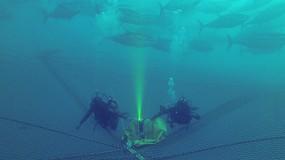 Foto de Hacia la digitalización de la pesca