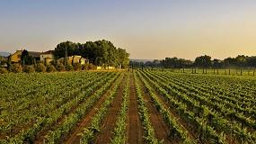 Foto de Familia Torres, la marca de vinos más admirada del mundo