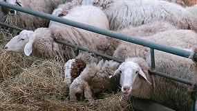 Foto de Escalada sin fin del precio de los piensos en ovino lechero con una subida del 7,7% en el primer trimestre de 2021