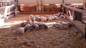 Foto de Continúa la subida de precios del pienso para el cebo de corderos con un aumento mensual del 5,1%
