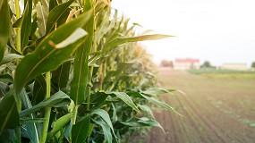 Foto de ANPROMIS sublinha a importância da contratualização de Seguro de Colheitas para o milho grão e silagem
