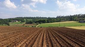 Foto de Una duda recurrente en el cultivo del maíz