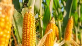 Foto de Webinar debate boas práticas na aplicação de fitofarmacêuticos no setor dos cereais