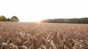 Foto de RAGT y Bayer impulsarán el desarrollo de nuevas variedades de trigo híbrido en Europa