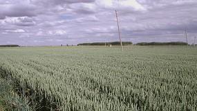 Foto de Uso de imágenes satelitales para mejorar la predicción del rendimiento de los cultivos