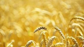 Foto de Agricultura amplía al 3,5% el recorte de número de hectáreas de cereales