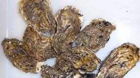 Foto de El IRTA investiga para conocer los mecanismos de resistencia antibiótica en las ostras