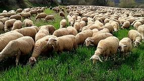 Foto de El Ministerio quiere extender las organizaciones de productores a vacuno, ovino y caprino de carne