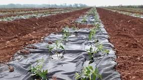 Foto de El Grupo AN realiza ensayos para sustituir el plástico agrario por papel biodegradable