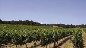 Foto de Oportunidades para el sector vitivinícola en Castilla y León a través del autoconsumo