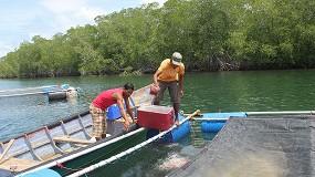 Foto de El IRTA participa en un proyecto para optimizar la producción de pargo lunarejo en Nicaragua
