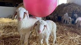 Foto de Mesa redonda el 17 de mayo sobre 'Protocolos de evaluación del bienestar animal en España'