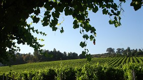 Foto de Estratégia de sustentabilidade para a região dos Vinhos Verdes apresentada hoje