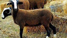 """Foto de Un total de veinte razas ovinas guardan su """"copia de seguridad"""" en el Banco de Germoplasma"""