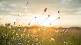 Foto de Dia Mundial do Ambiente celebra-se hoje
