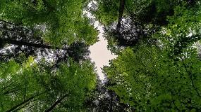 Foto de El interés por el medio ambiente, motor de recuperación en todos los sectores económicos
