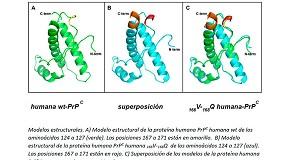 Foto de Identificados dos aminoácidos que favorecen la resistencia a las infecciones con priones