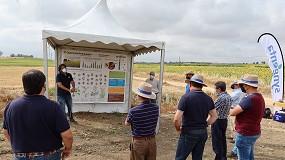 Foto de Syngenta muestra las novedades en girasol relacionadas con sanidad vegetal y sostenibilidad
