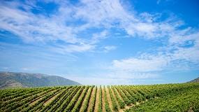 Foto de Setor vitivinícola com reforço de 4 milhões de euros