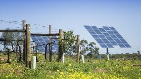 Foto de Programa de sustentabilidade dos Vinhos do Alentejo integra iniciativa internacional de adaptação ao aquecimento global