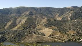 Foto de Douro: IVDP quer compromisso para a sustentabilidade