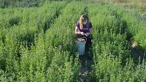Foto de El IdAB-CSIC evalúa la eficiencia de distintas variedades de alfalfa en Navarra