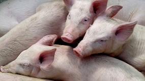 Foto de Lonja Agropecuaria de Segovia - Cotizaciones de Ovino y Porcino (Semana 29, 22/7/2021)