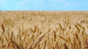 Foto de Los cereales vuelven a repuntar con el trigo duro subiendo casi un 10%