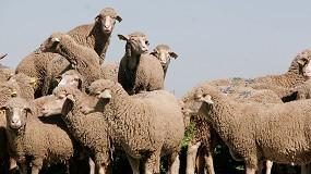 Foto de La Junta de Extremadura adjudica a Tragsatec la ejecución de los programas de sanidad animal
