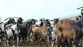 Foto de Curso online sobre bioseguridad y manejo sanitario en los rebaños de cabra Majorera