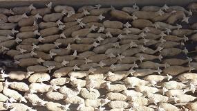 Foto de La cotización de la piel fina de oveja se revaloriza un 76,2% desde el comienzo del año