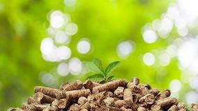 Foto de Os desafios da Biomassa em prol da sustentabilidade