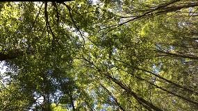 Foto de A gestão florestal agrupada como impulso para a valorização da biomassa residual florestal