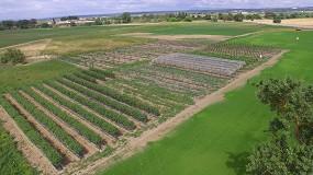 Foto de Consumo e sustentabilidade em debate na Agroglobal