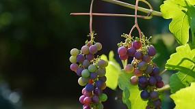 Foto de Agroglobal: setor do vinho em debate a 9 de setembro