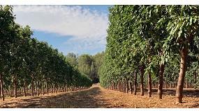 Foto de ¿Es la rentabilidad en cultivos leñosos dependiente del sistema de riego?