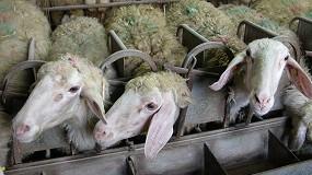 Foto de Se dilata el diferencial de cotizaciones de la leche de oveja entre las dos Castillas