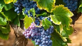 Foto de Indústria vitivinícola une esforços para definir sustentabilidade para o setor