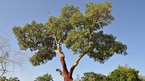 Foto de Coruche debate regeneração natural de sobreiro e azinheira