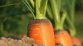 Foto de Metade dos fertilizantes agrícolas utilizados em Portugal pode originar poluição do solo e da água