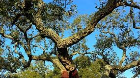 Foto de Presidente da CELPA critica nova estratégia florestal europeia