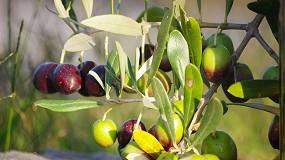 Foto de Sustentabilidade dos olivais de alta densidade em debate no IX Simpósio Nacional de Olivicultura