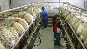 Foto de Vuelve a caer más de un 4% la evolución anual de ganaderos en ovino de leche