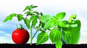 Foto de Cuidando el suelo, futuro de tu cultivo